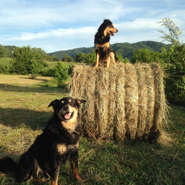 Chip and Penny on Haybale