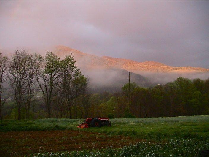 Foggy Broadwing Farm
